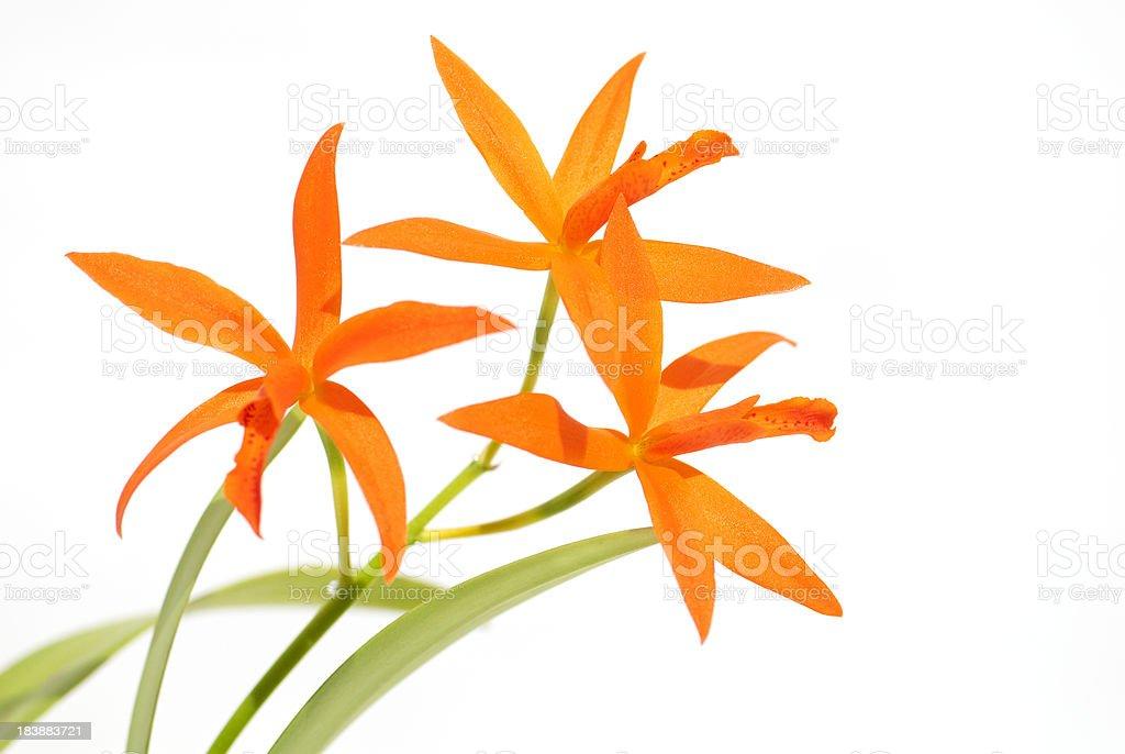 Orange Catts stock photo