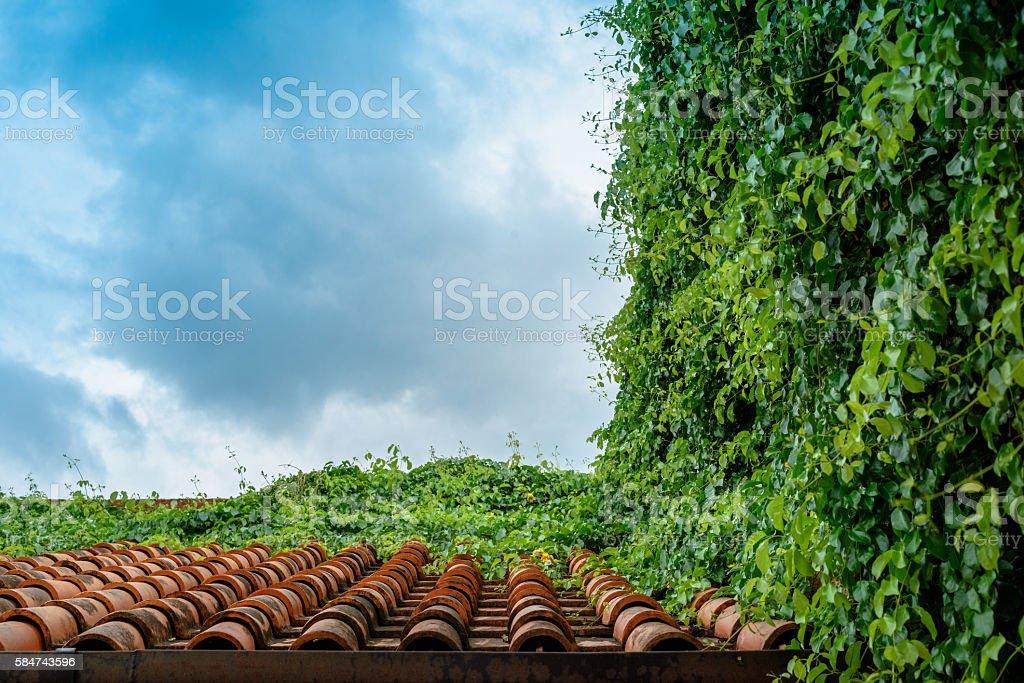 Orange ceramic roof tile covered with vines photo libre de droits