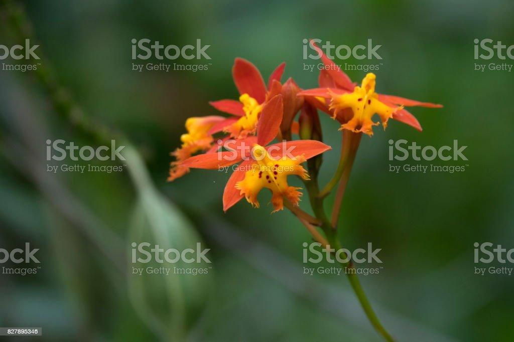 Orange colored flowers stock photo