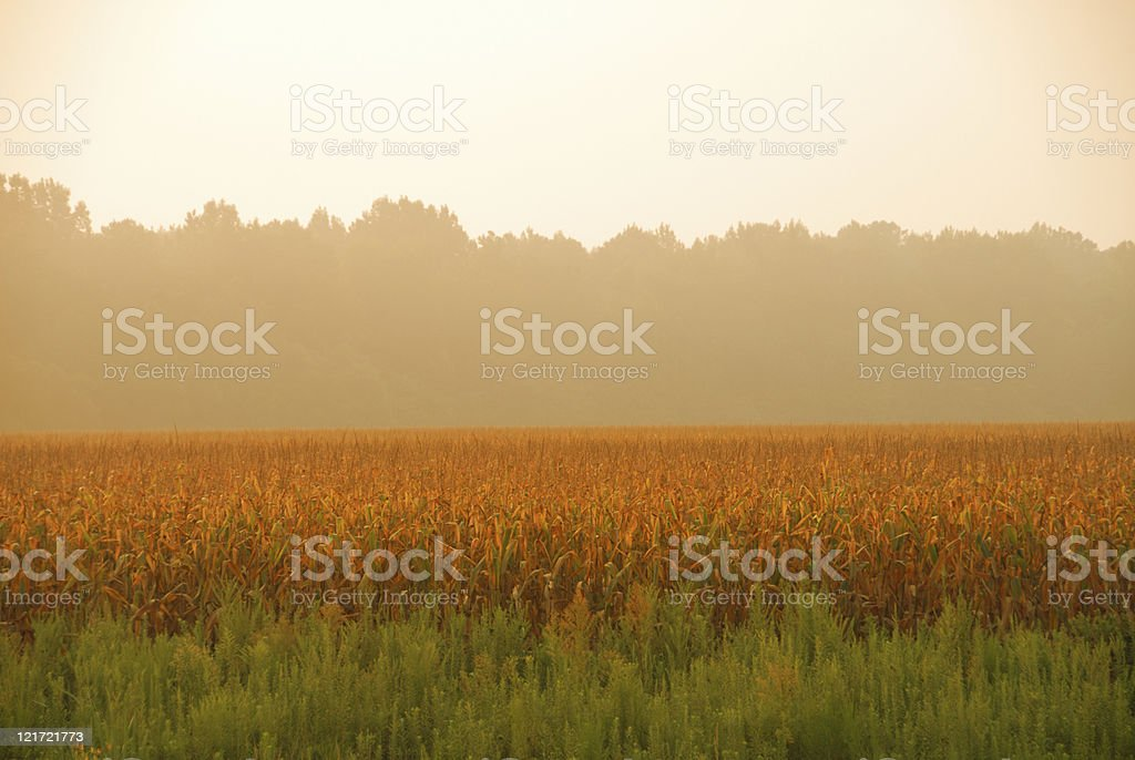 Orange Cornfield Haze royalty-free stock photo