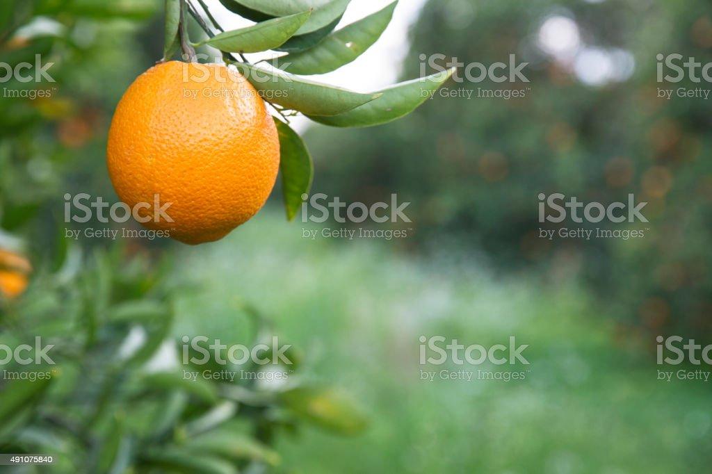 Orange County stock photo