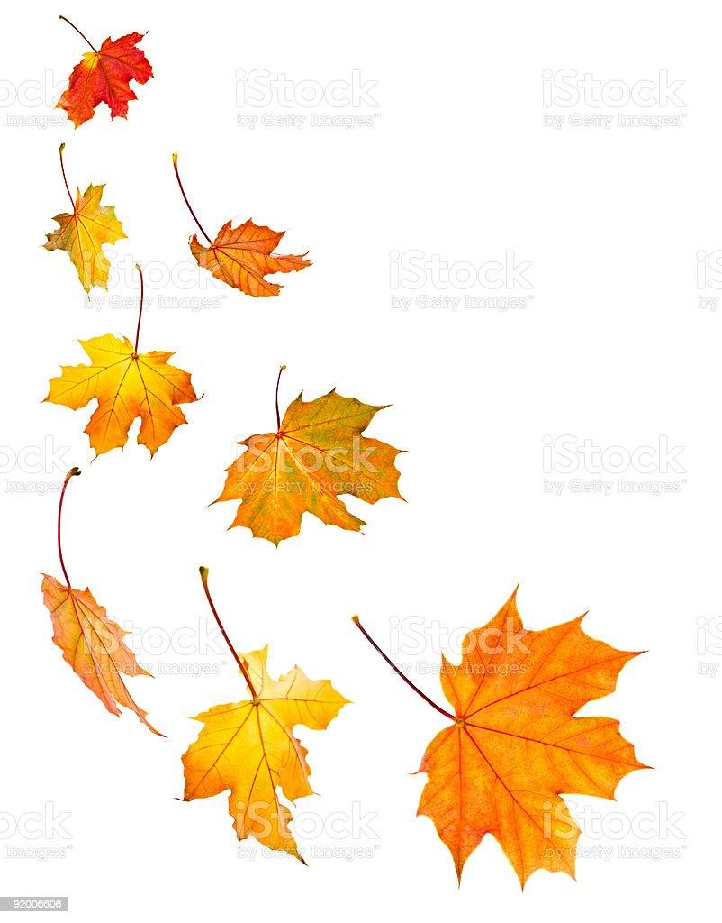 Orange crispy cascading autumn leaves royalty-free stock photo