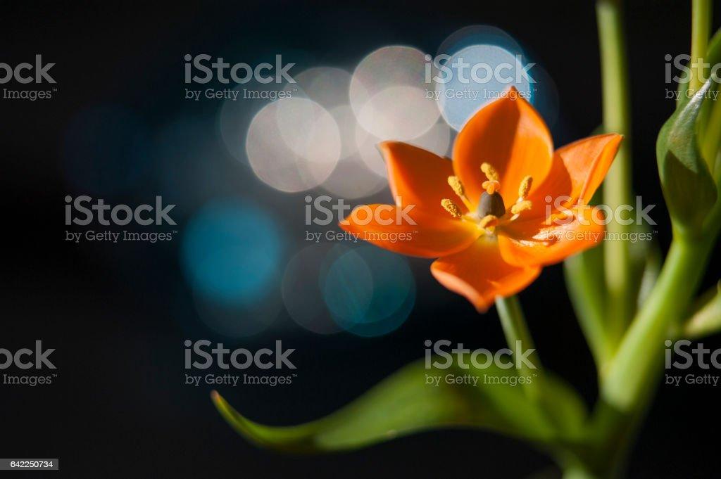 Orange Crush stock photo