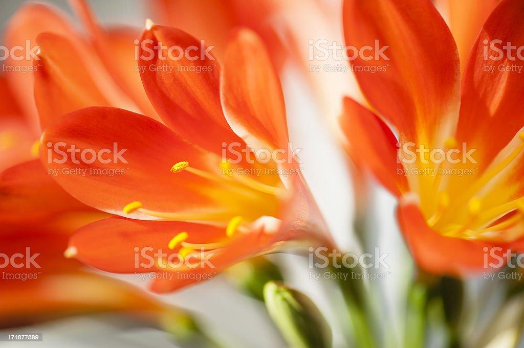 Orange Crush Series stock photo