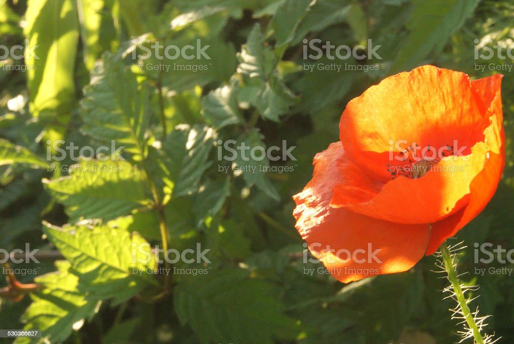 Orange Cup royalty-free stock photo