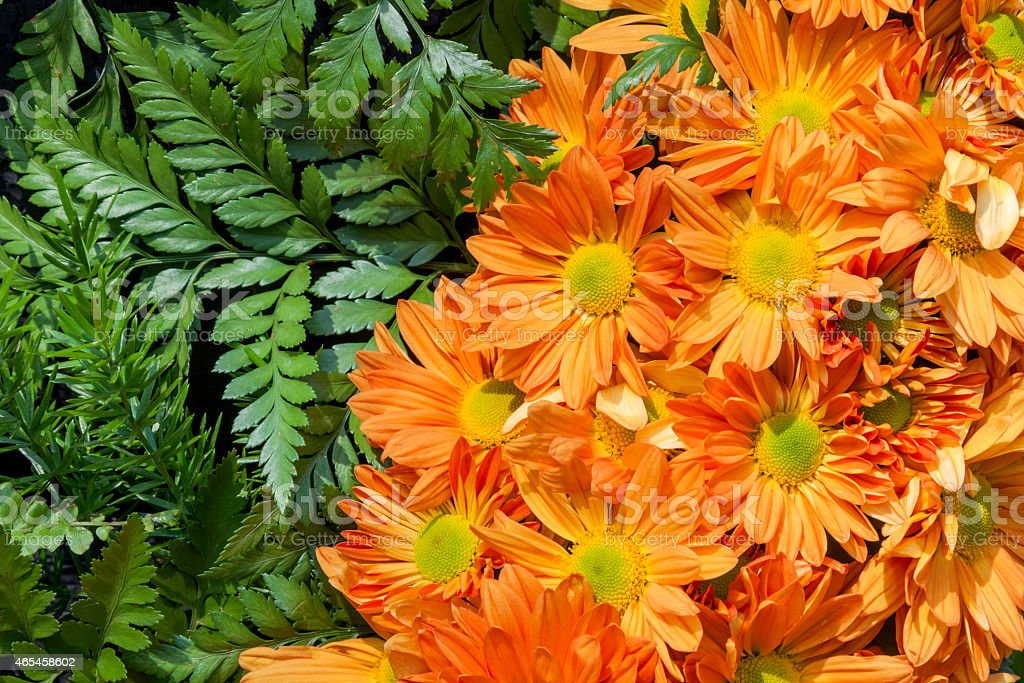 Orange Daisy royalty-free stock photo
