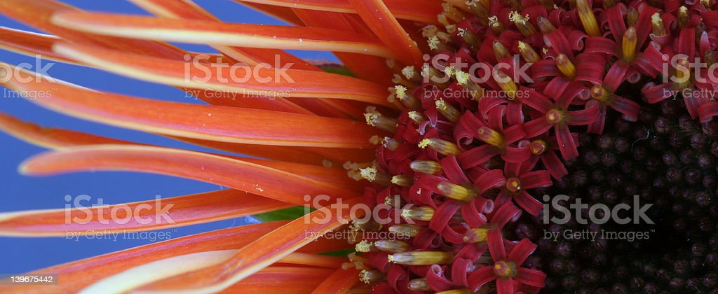 Orange Delight royalty-free stock photo