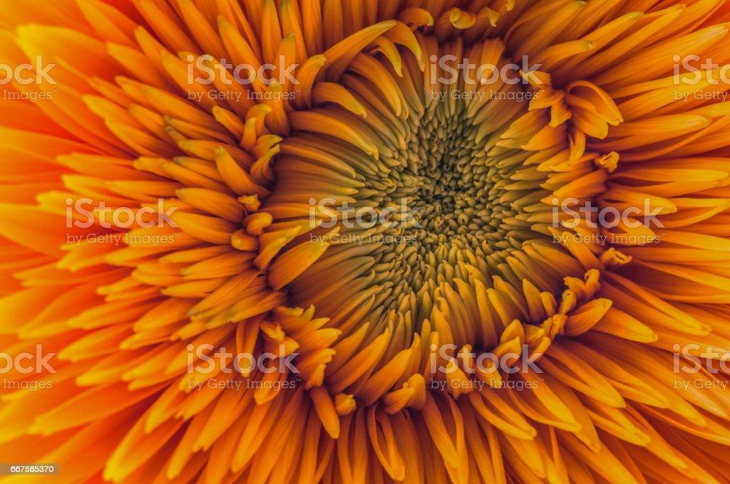 Orange explosion stock photo