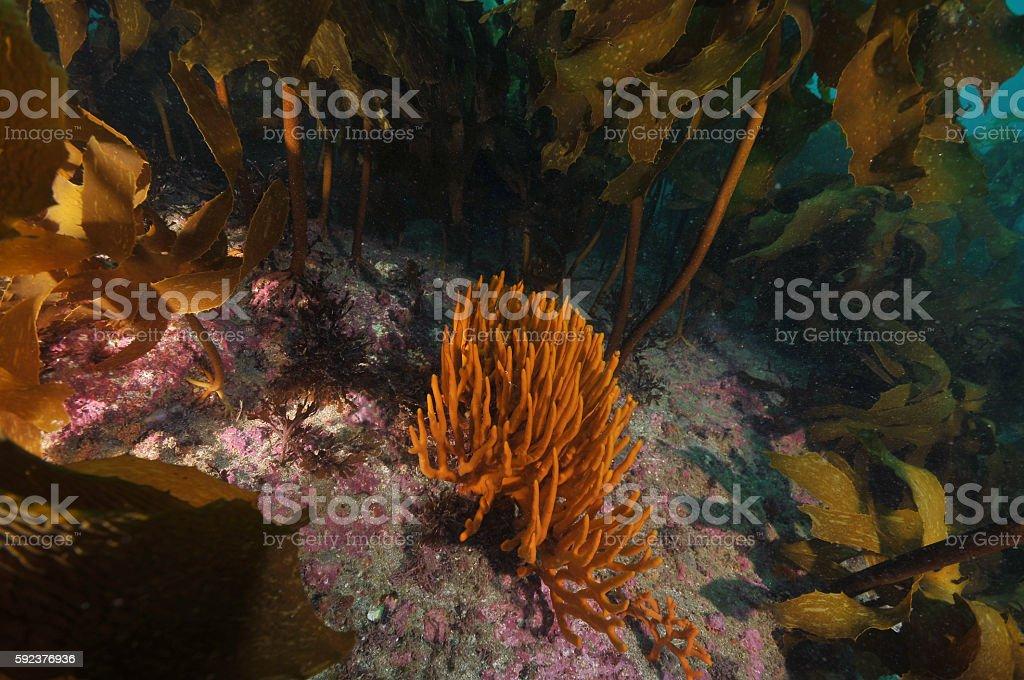 Orange finger sponge stock photo