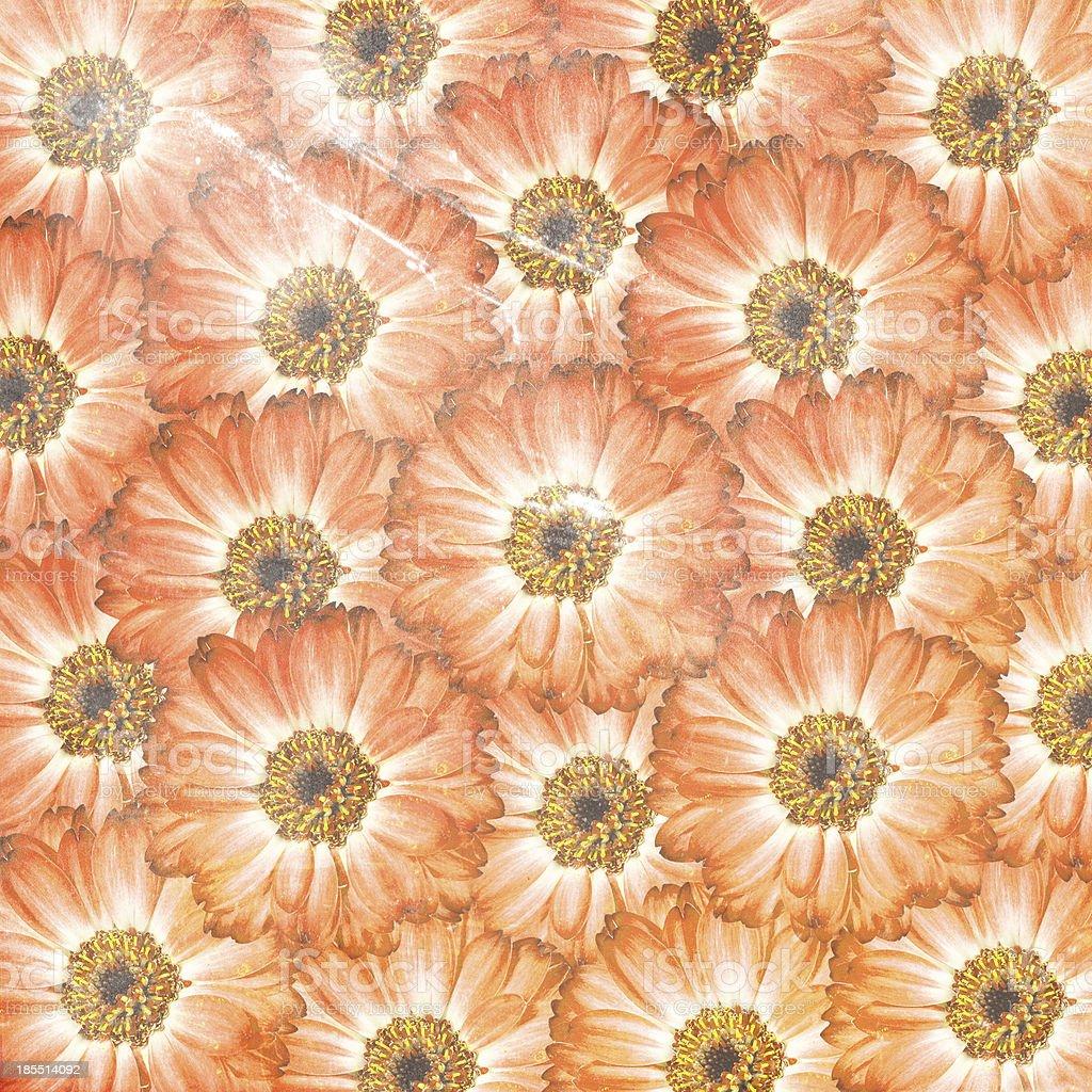 orange flower background royalty-free stock photo