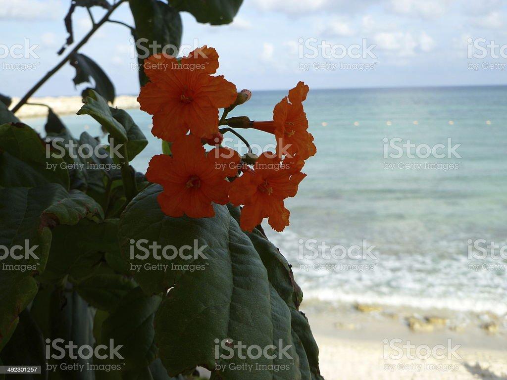 Orange Flower with Beach Background royalty-free stock photo