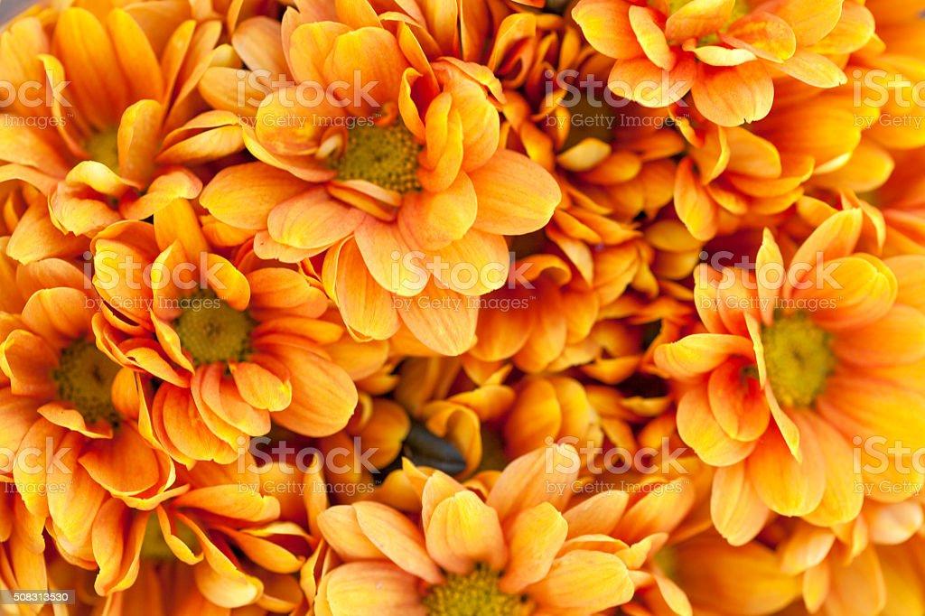 Orange Flowers Background stock photo