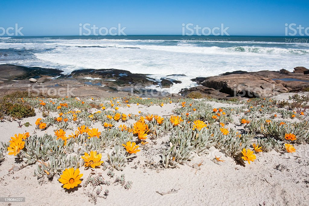 Orange flowers on the beach royalty-free stock photo