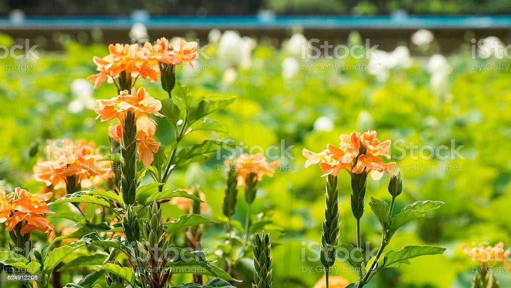 Orange Blumen  Lizenzfreies stock-foto