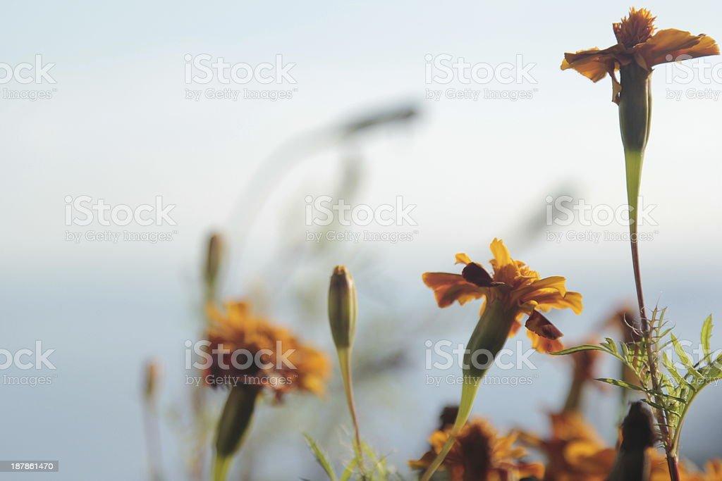 Orange flowers with sky background stock photo