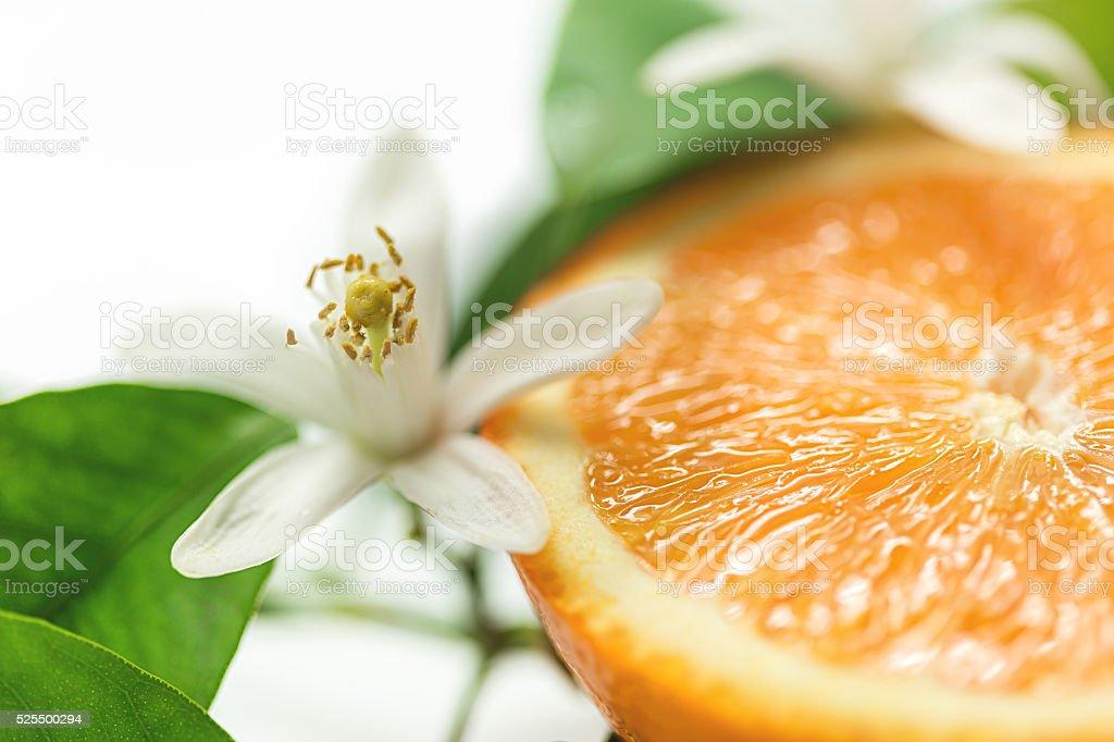 Frutas e flores de laranja, foco seletivo foto royalty-free