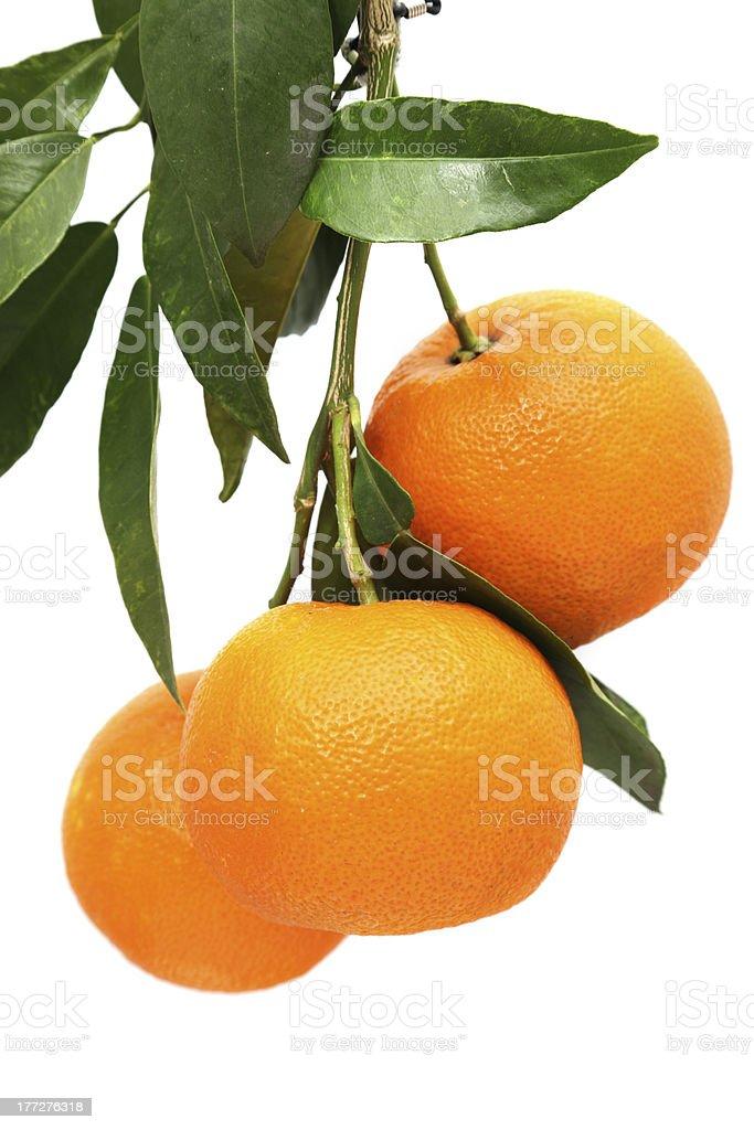orange fruits and leaf stock photo