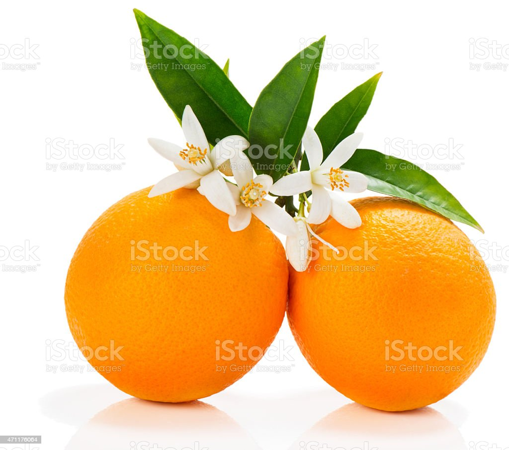 Orange fruits with blossom stock photo