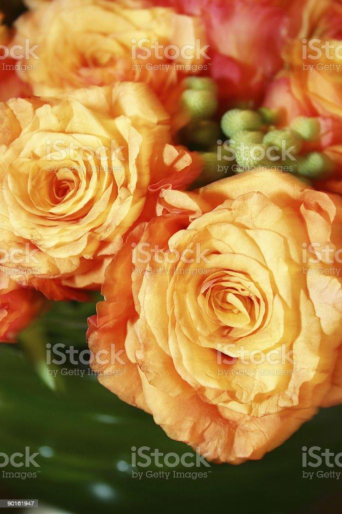 orange full bloom roses royalty-free stock photo