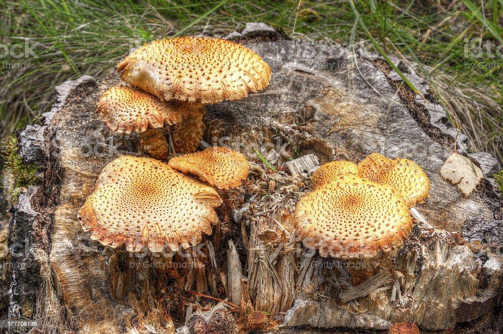Orange fungus on tree royalty-free stock photo