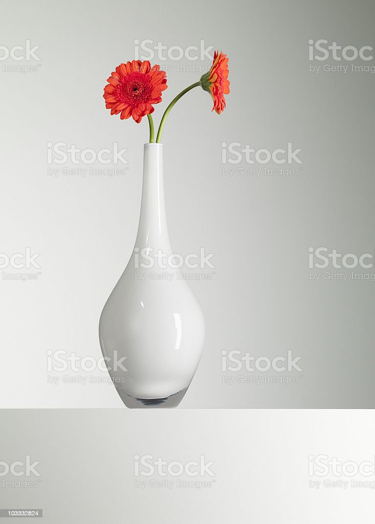 Orange gerbera daisies in vase stock photo