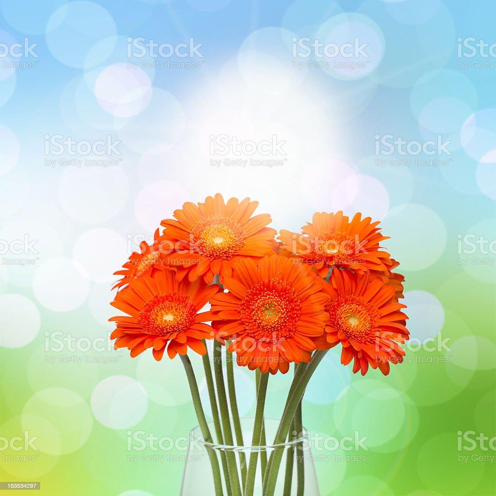Orange gerbera flower in vase on spring background royalty-free stock photo