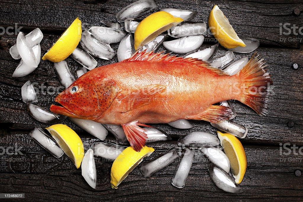 Orange Grouper on Ice stock photo