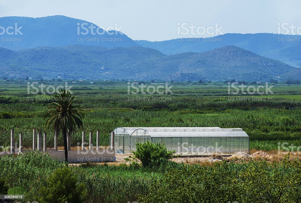 Orange groves and mountain backdrop royalty-free stock photo