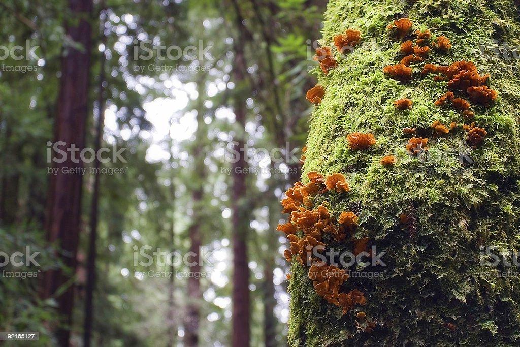 Orange Growth on Green Trees stock photo