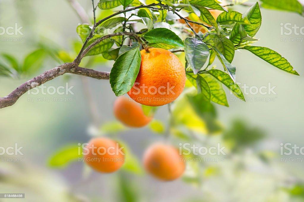 Orange H stock photo