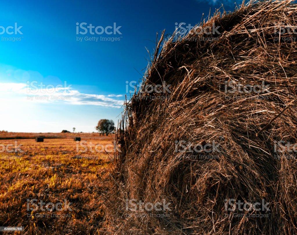 Orange hayrick/haystack stock photo