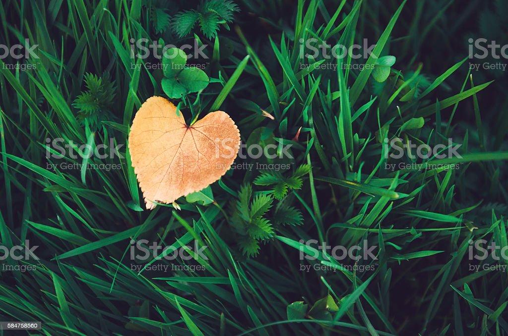 Orange heart-shaped leaf lying on fresh green grass, autumn stock photo