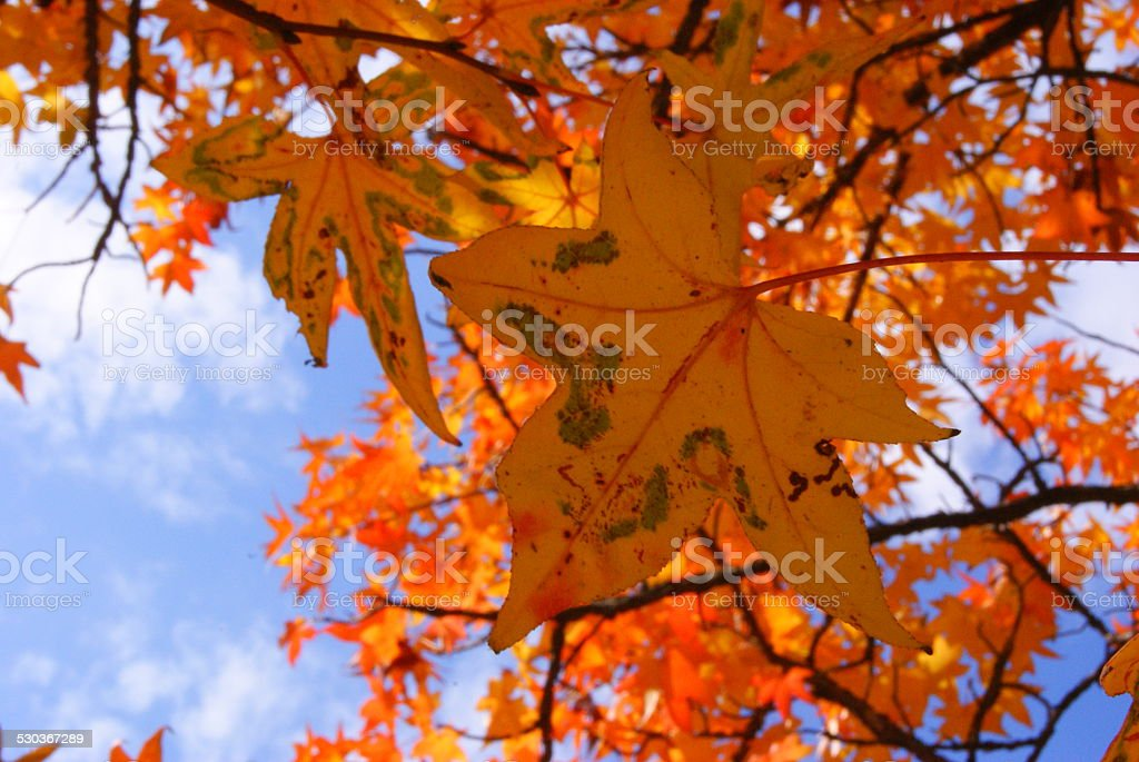 Orange Hues royalty-free stock photo