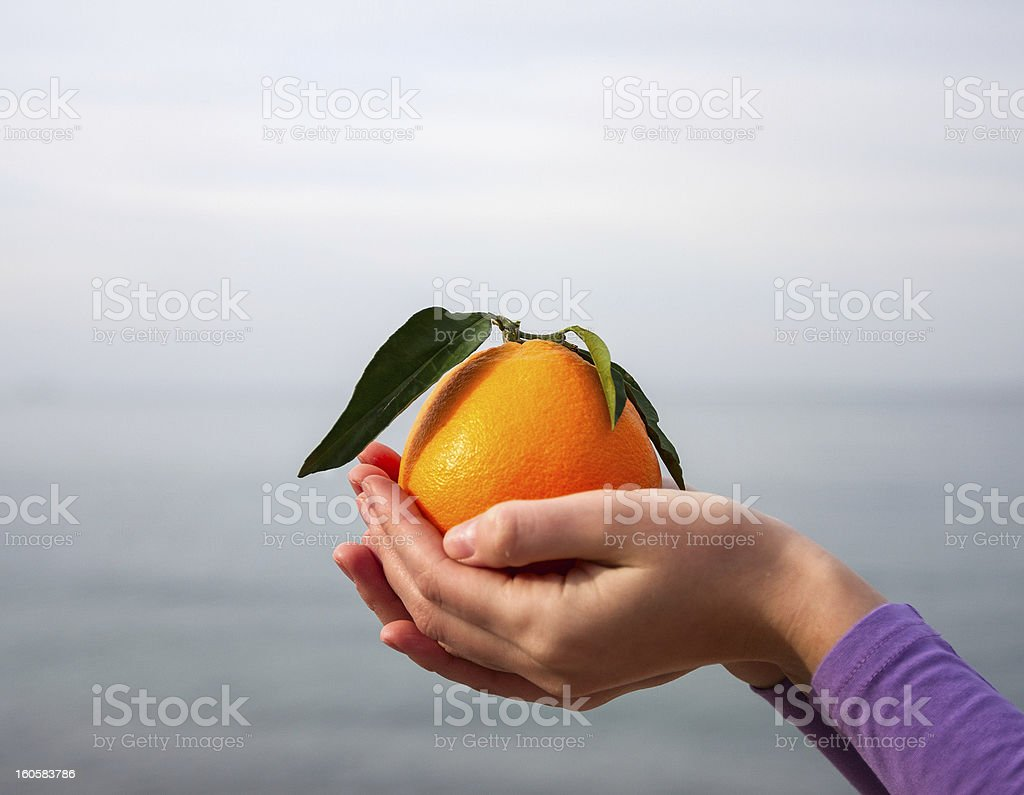 Orange in palm of hand royalty-free stock photo