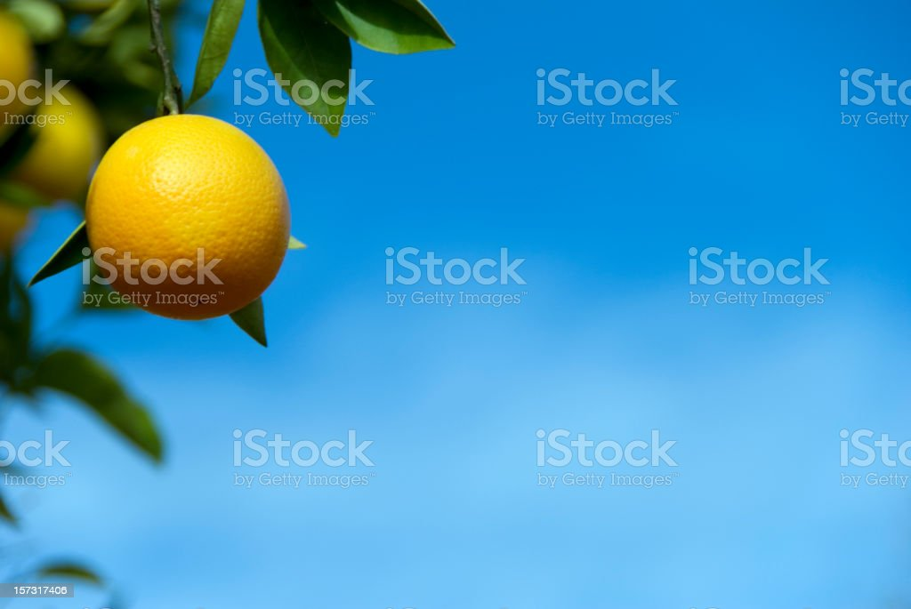 Orange in the sky royalty-free stock photo