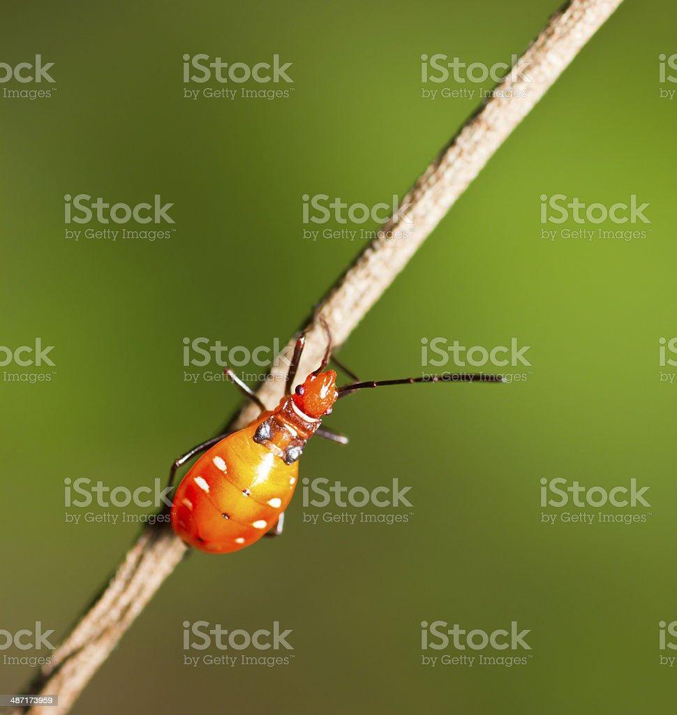 Orange Insect stock photo