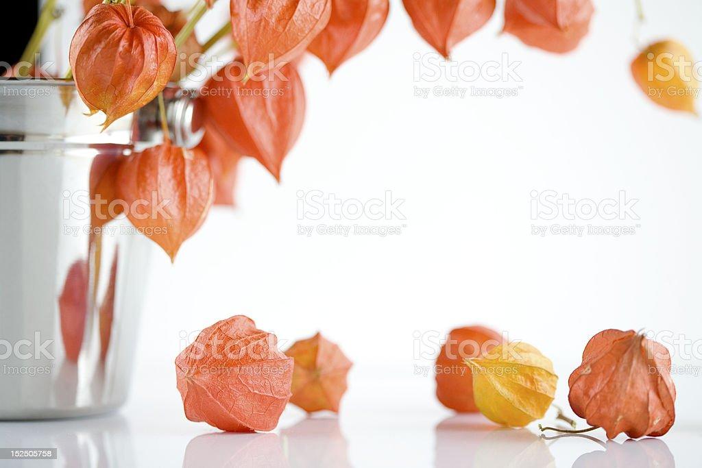 Orange Japanese lantern flowers royalty-free stock photo