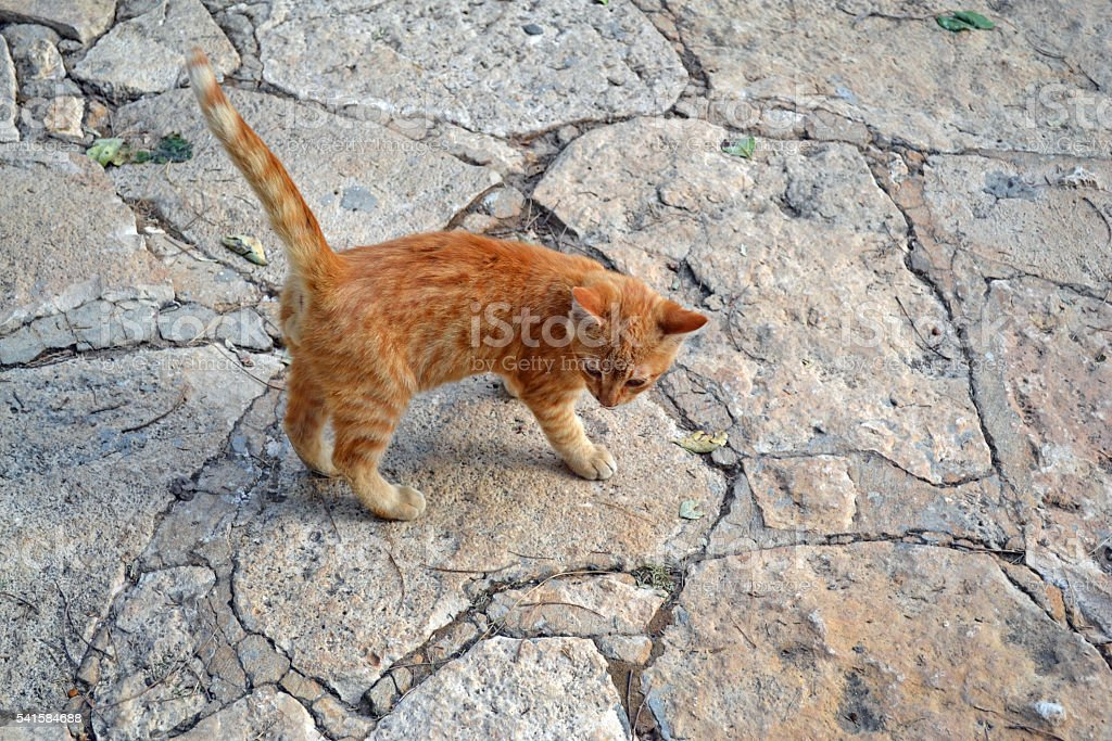 Orange Kitten stock photo