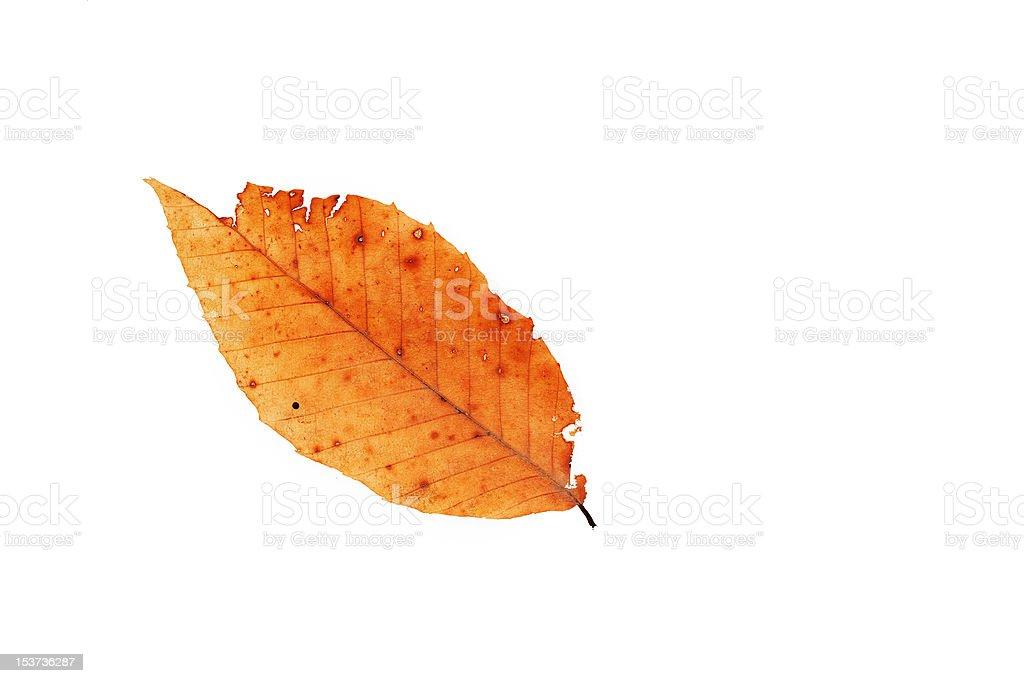 Orange leaf isolated on white stock photo