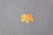 orange leaf on a gray sand
