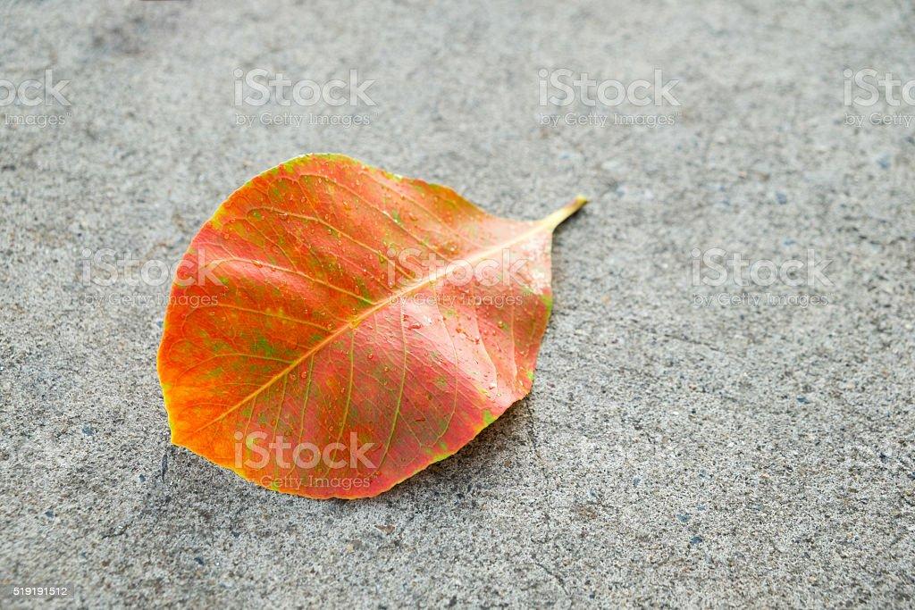Orange Blatt auf Asphalt Hintergrund Lizenzfreies stock-foto