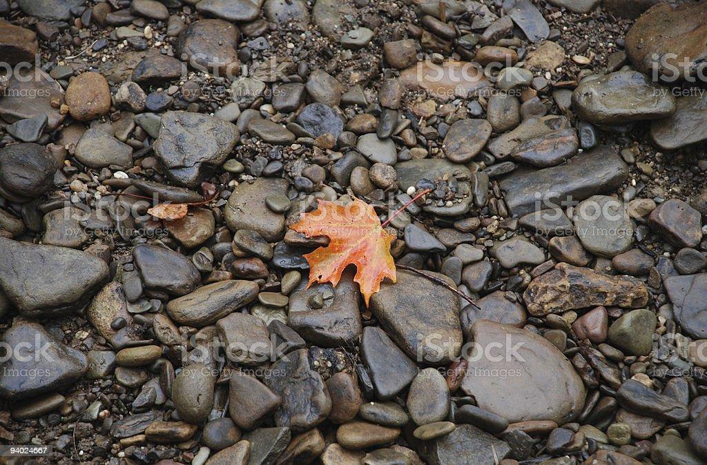 Orange Leaf on Rocks royalty-free stock photo