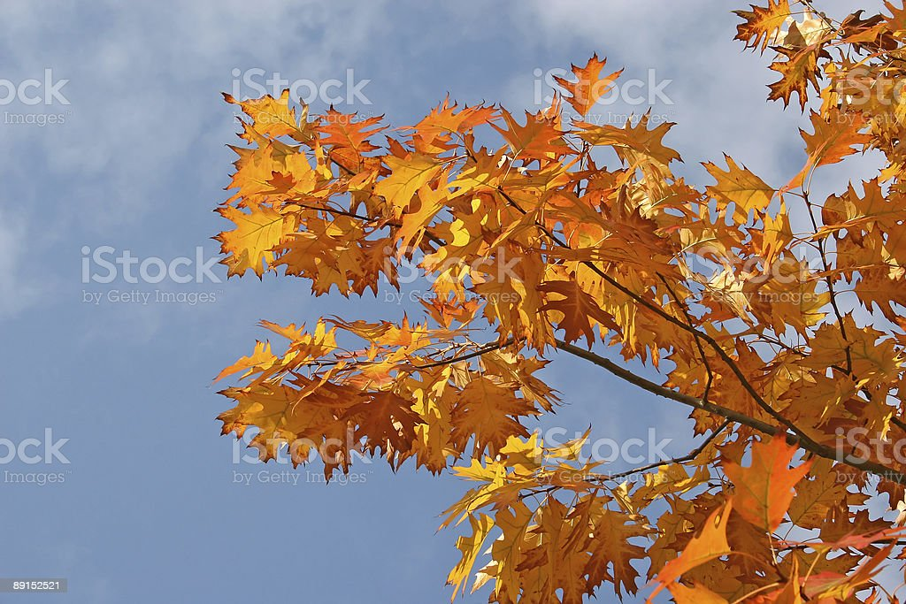 Orange leaves stock photo