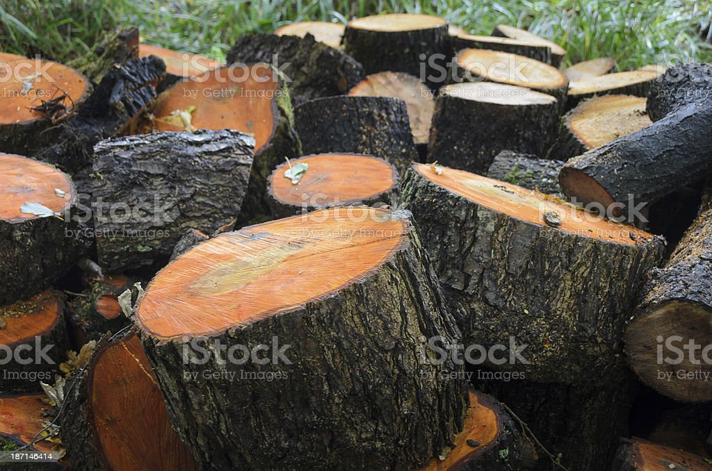 Orange Logs on the Forest Floor royalty-free stock photo