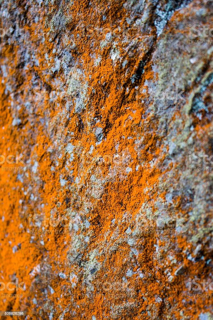 Laranja Musgo no Rock foto de stock royalty-free