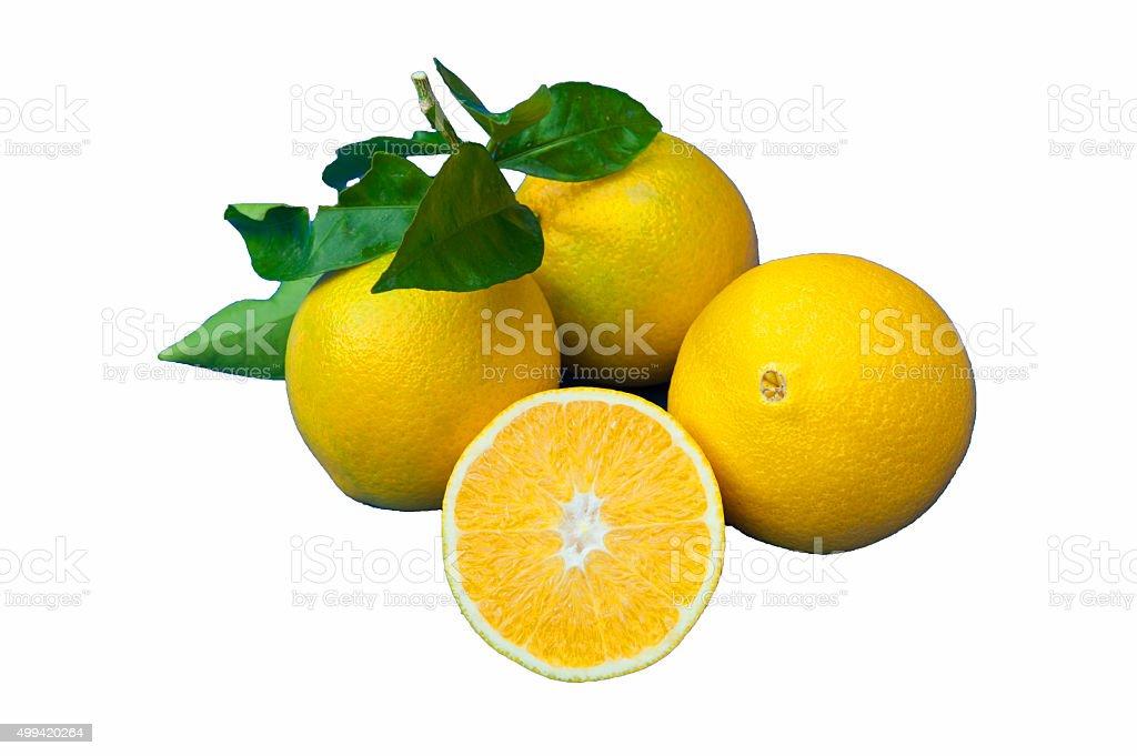 Orange on white stock photo