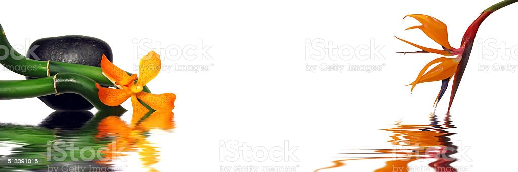 Orange orchid and strelitzia header stock photo