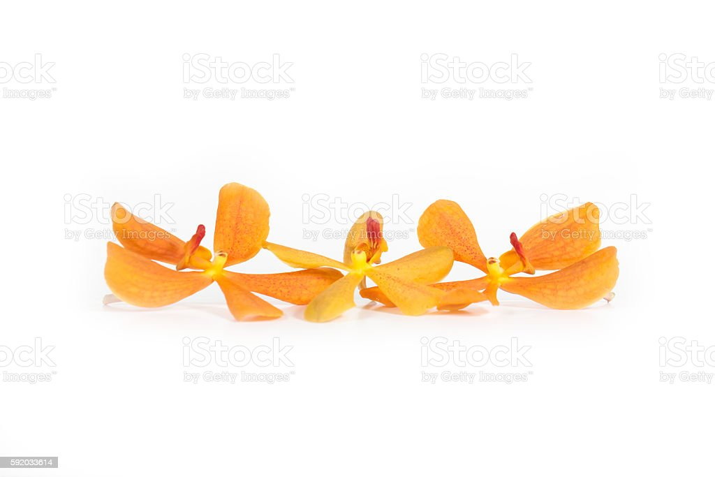 Orange orchids isolated on white background - for displate text. stock photo