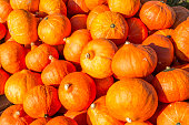 Orange ornamental gourds and pumpkins .