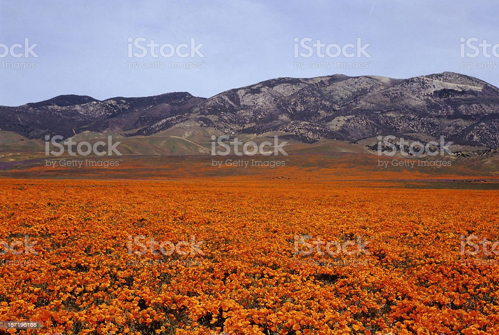 Orange Pasture stock photo